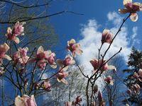 Moms-magnolia-lambertville2
